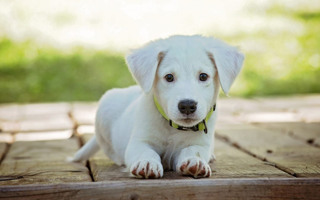 Puppy Care Tips
